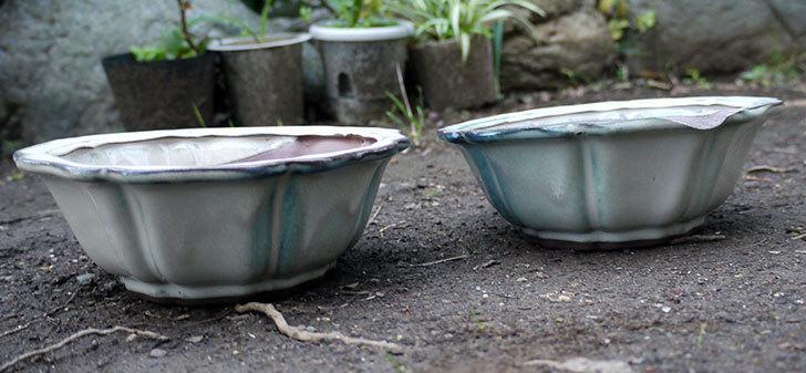 ダイソーでD陶磁器植木鉢-72-和風植木鉢(八方輪花)を買って来た1.jpg
