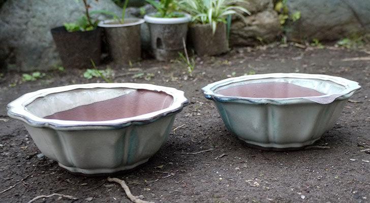 ダイソーでD陶磁器植木鉢-72-和風植木鉢(八方輪花)を買って来た3.jpg