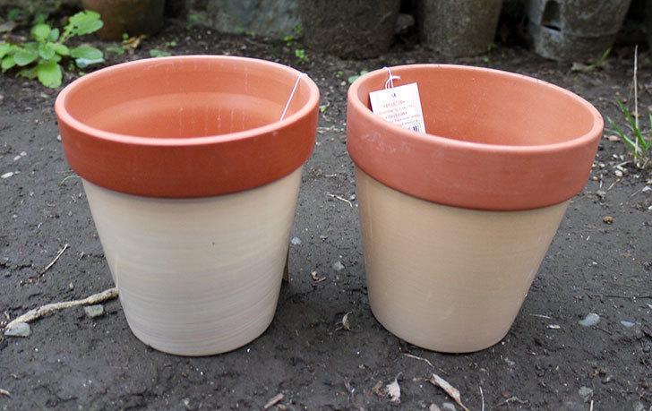 ダイソーでカラーテラコッタ植木鉢4号を買って来た1.jpg