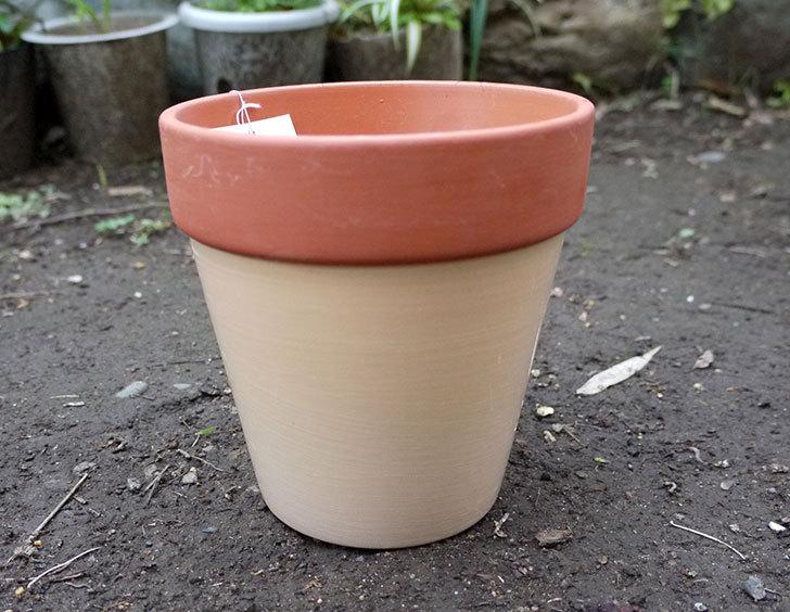 ダイソーでカラーテラコッタ植木鉢4号を買って来た2.jpg