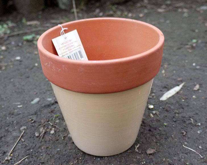 ダイソーでカラーテラコッタ植木鉢4号を買って来た3.jpg