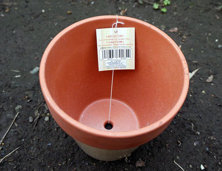 ダイソーでカラーテラコッタ植木鉢4号を買って来た4.jpg