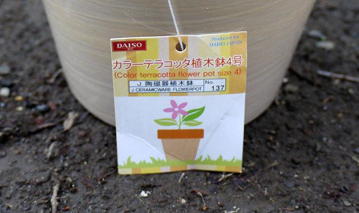 ダイソーでカラーテラコッタ植木鉢4号を買って来た5.jpg