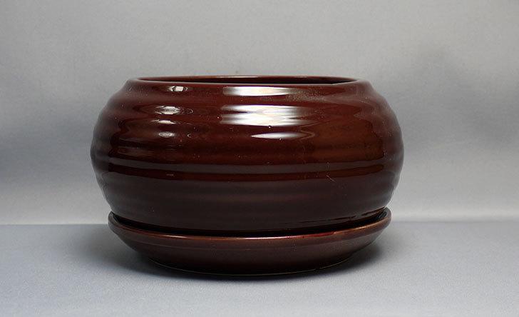 ダイソーで和モダン植木鉢-陶器植木鉢K2の黒と茶を買って来た2.jpg