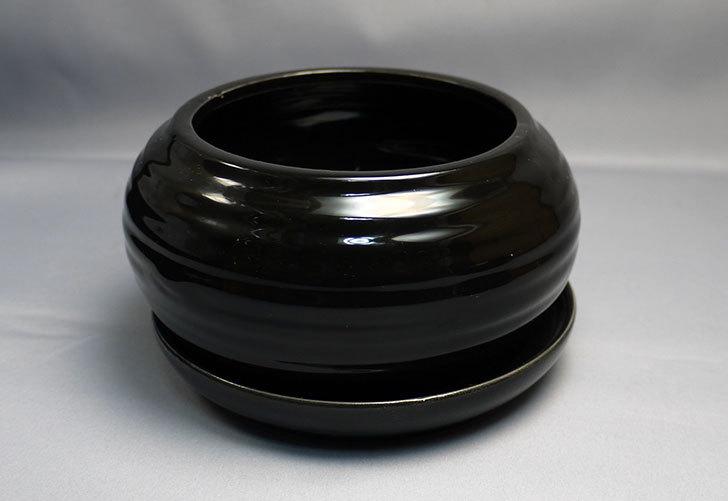 ダイソーで和モダン植木鉢-陶器植木鉢K2の黒と茶を買って来た5.jpg