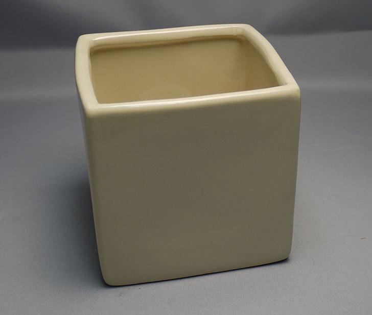 ダイソーで四角植木鉢-方形花盆-洋陶器植木鉢40を3個買って来た10.jpg