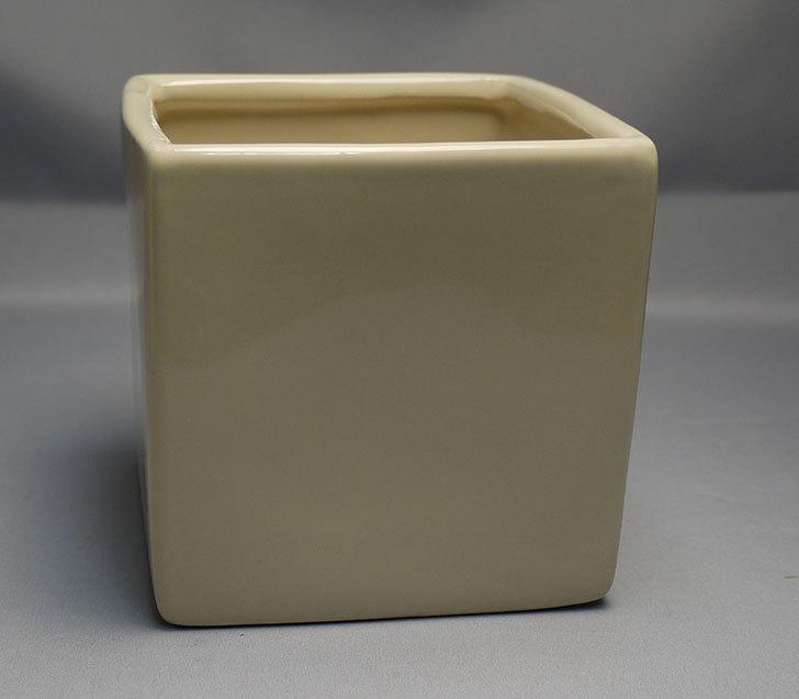 ダイソーで四角植木鉢-方形花盆-洋陶器植木鉢40を3個買って来た11.jpg