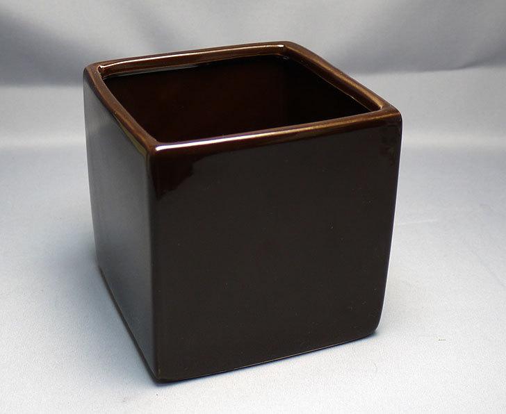 ダイソーで四角植木鉢-方形花盆-洋陶器植木鉢40を3個買って来た3.jpg