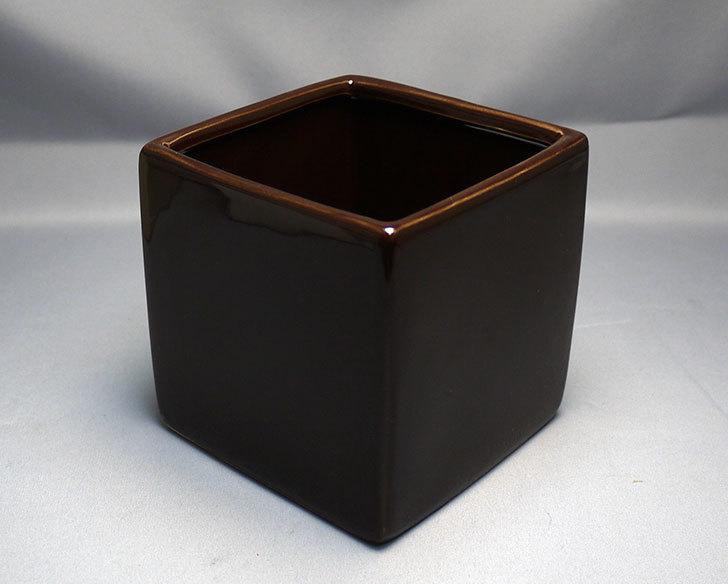 ダイソーで四角植木鉢-方形花盆-洋陶器植木鉢40を3個買って来た4.jpg