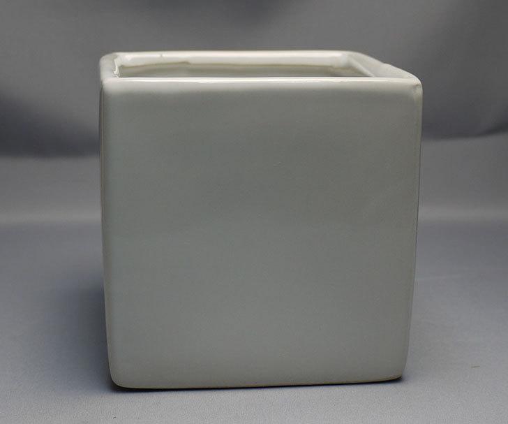 ダイソーで四角植木鉢-方形花盆-洋陶器植木鉢40を3個買って来た6.jpg