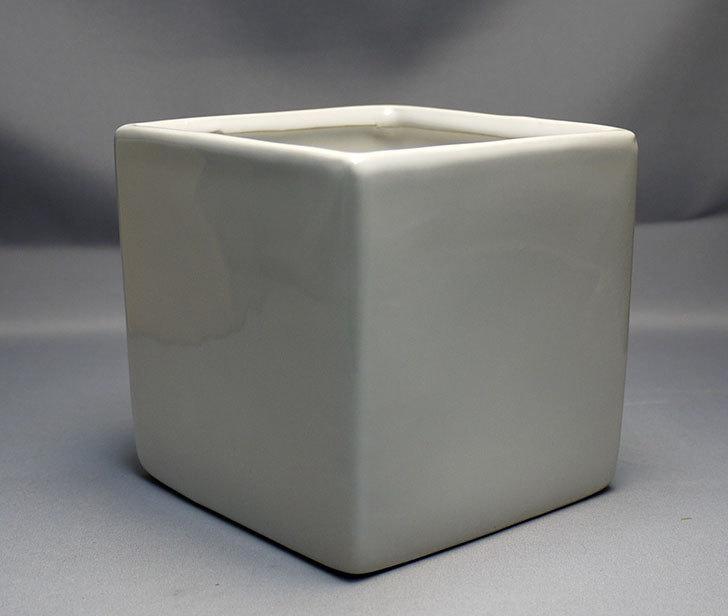 ダイソーで四角植木鉢-方形花盆-洋陶器植木鉢40を3個買って来た7.jpg