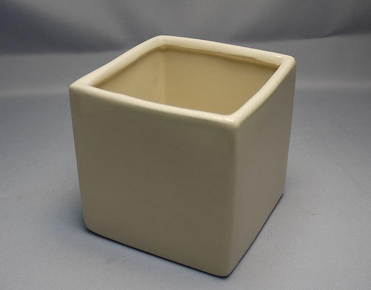 ダイソーで四角植木鉢-方形花盆-洋陶器植木鉢40を3個買って来た9.jpg