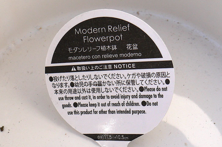 ダイソーで柄違いのモダンレリーフ植木鉢-花盛6.jpg