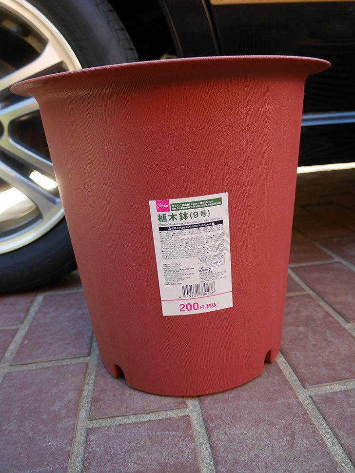 ダイソーで植木鉢9号を買って来た。2021年-002.jpg