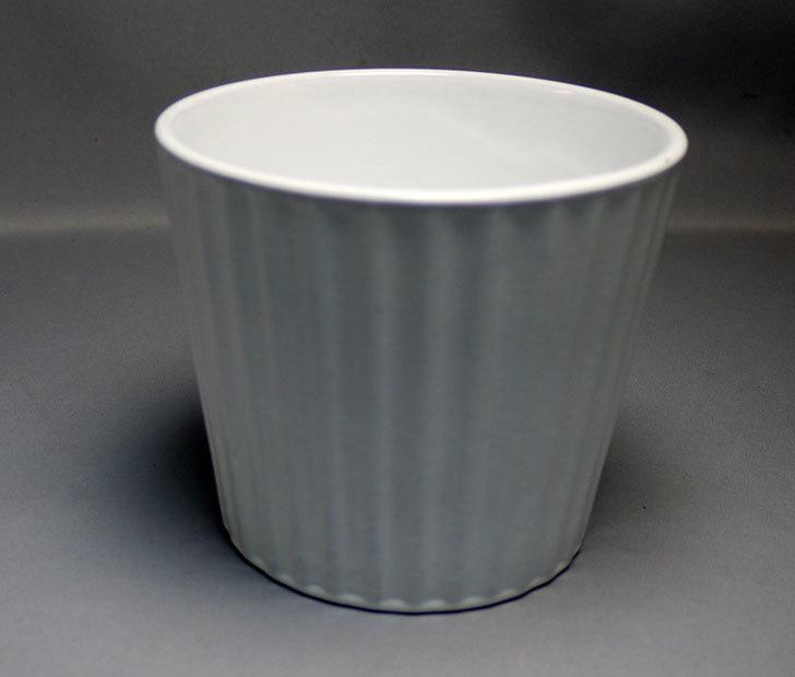 ダイソーで素焼き植木鉢(ストライプ)を3個買って来た3.jpg