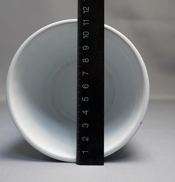 ダイソーで素焼き植木鉢(ストライプ)を3個買って来た6.jpg