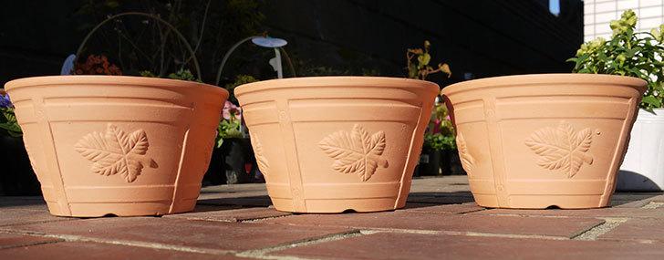 ダイソーで素焼き植木鉢K44を3個買って来た1.jpg