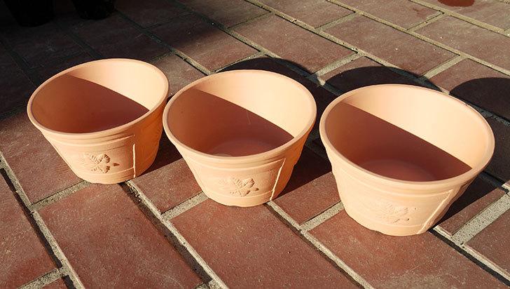 ダイソーで素焼き植木鉢K44を3個買って来た3.jpg