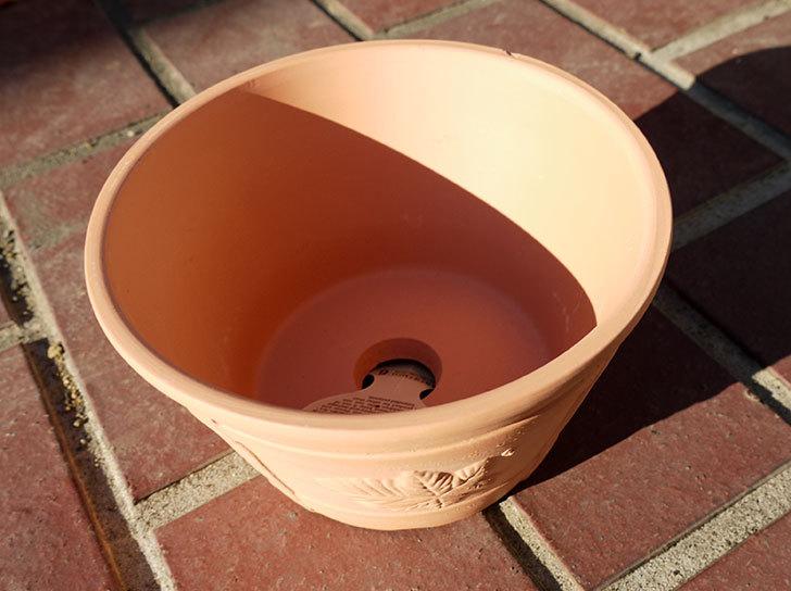 ダイソーで素焼き植木鉢K44を3個買って来た5.jpg