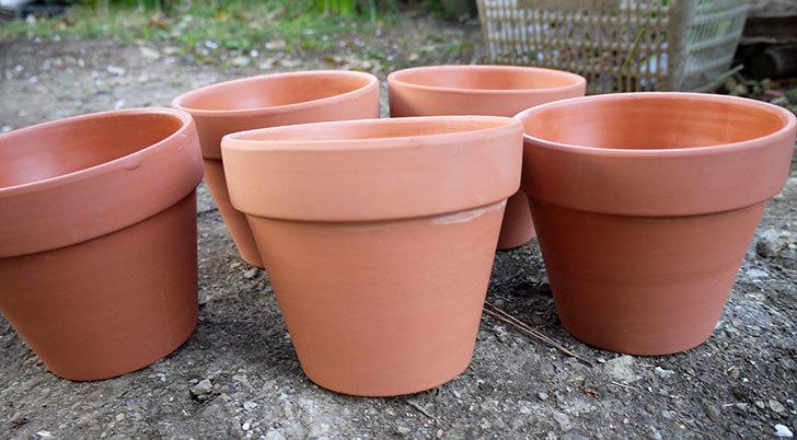 ダイソーで素焼植木鉢-約15cmを5個買って来た1.jpg