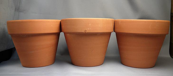 ダイソーで素焼植木鉢-約17cmを3個買って来た1.jpg