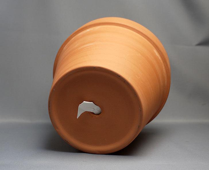 ダイソーで素焼植木鉢-約17cmを3個買って来た4.jpg