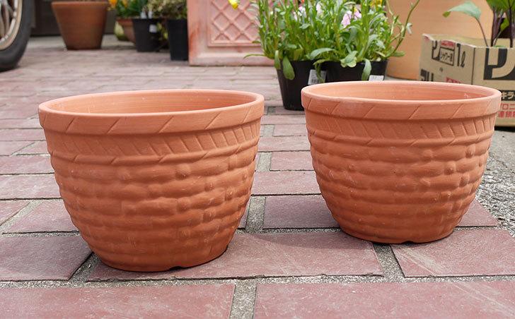 ダイソーで素焼植木鉢C-素材花盆-素焼き植木鉢K44を2個買って来た1.jpg