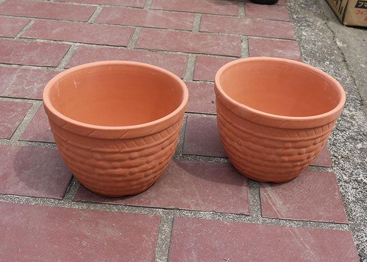 ダイソーで素焼植木鉢C-素材花盆-素焼き植木鉢K44を2個買って来た2.jpg