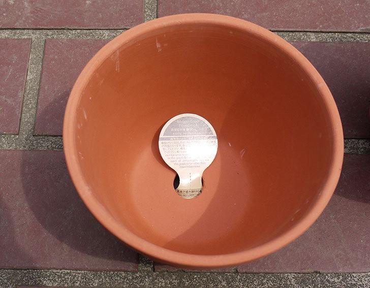 ダイソーで素焼植木鉢C-素材花盆-素焼き植木鉢K44を2個買って来た3.jpg