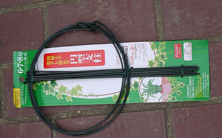 ダイソーで鉢植えの葉ダレ防止用円型支柱-6、7、8号用-高さ28cmを買って来た2.jpg