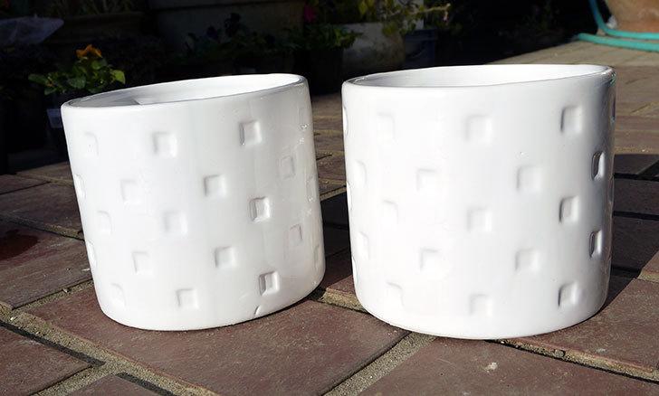 ダイソーで陶器植木鉢L174を2個買って来た1.jpg