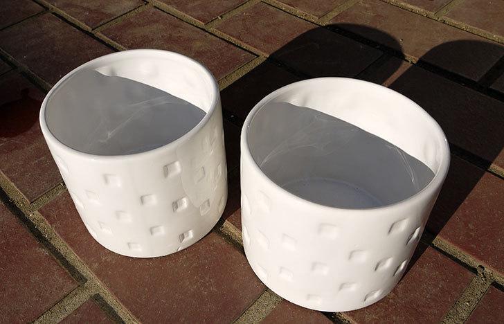 ダイソーで陶器植木鉢L174を2個買って来た2.jpg