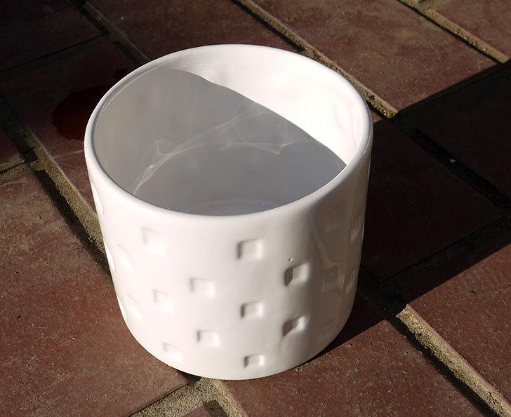 ダイソーで陶器植木鉢L174を2個買って来た3.jpg