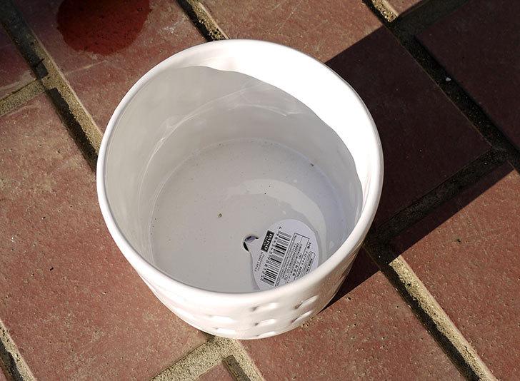 ダイソーで陶器植木鉢L174を2個買って来た4.jpg