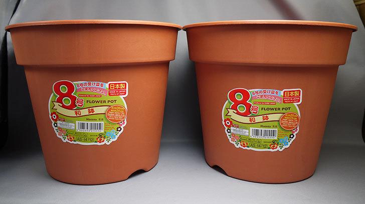 ダイソーでFLOWER-POT-8号-和鉢の茶色を2個買って来た1.jpg