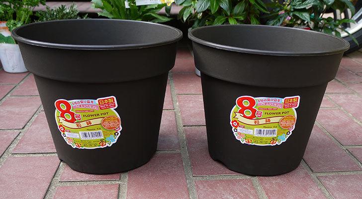 ダイソーでFLOWER-POT-8号-和鉢を買って来た1.jpg