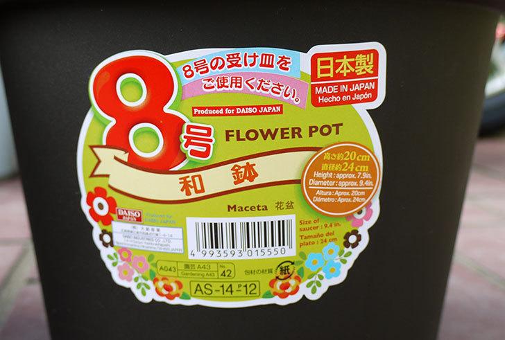 ダイソーでFLOWER-POT-8号-和鉢を買って来た4.jpg
