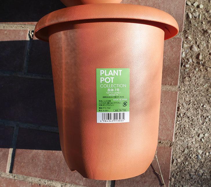 ダイソーでPLANT-POT-COLLECTIO-長鉢7号を14個買って来た2.jpg