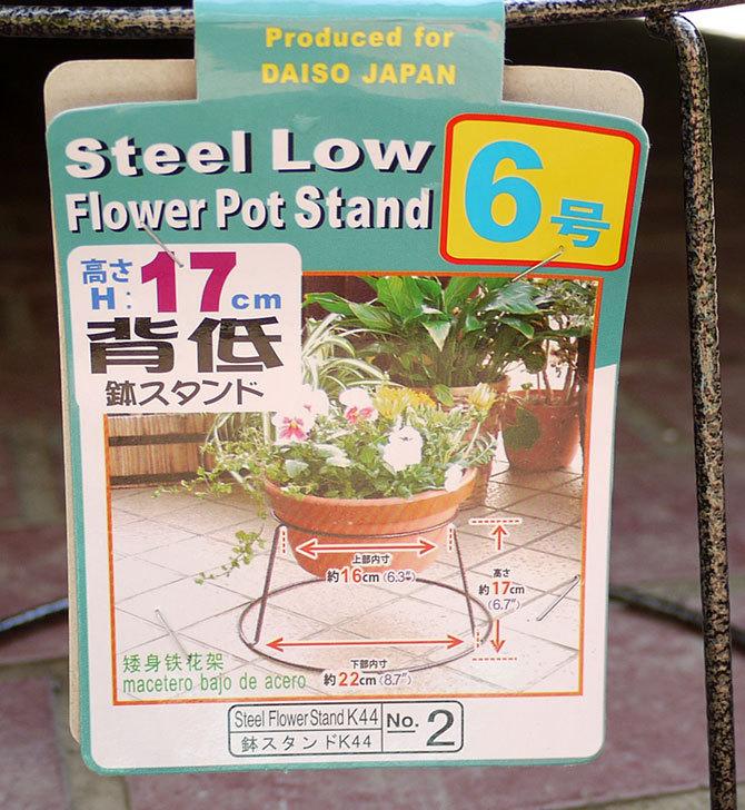 ダイソーでSteel-Low-Flower-Stand-5号、6号、7号を買って来た5.jpg
