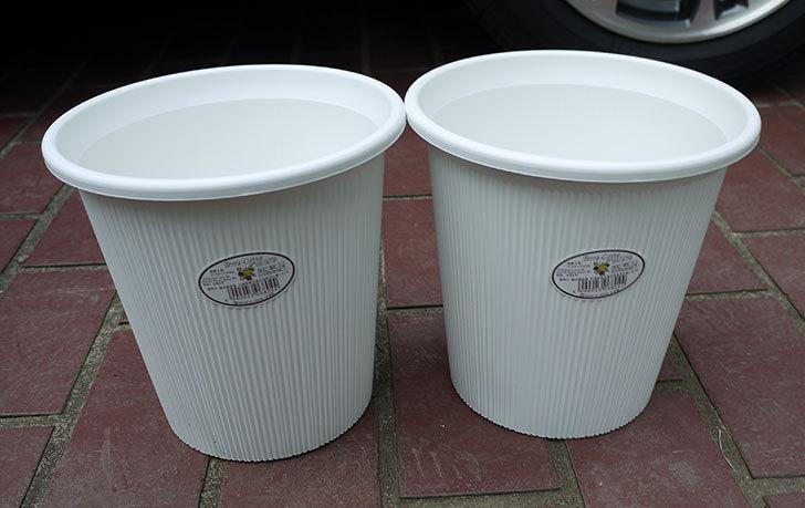 ダイソーでTerra-Cotta-長鉢6号を2個買って来た1.jpg