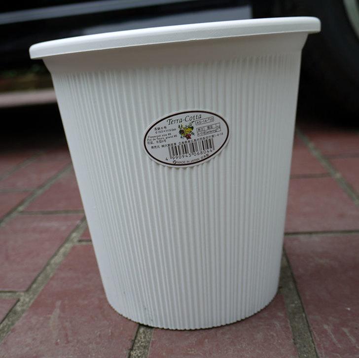 ダイソーでTerra-Cotta-長鉢6号を2個買って来た2.jpg