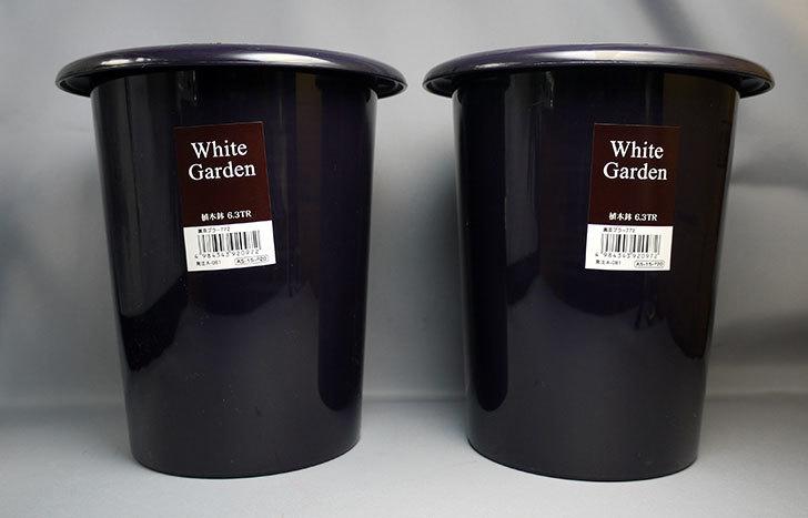 ダイソーでWhite-Garden-植木鉢-6.3TRを2個買って来た1.jpg