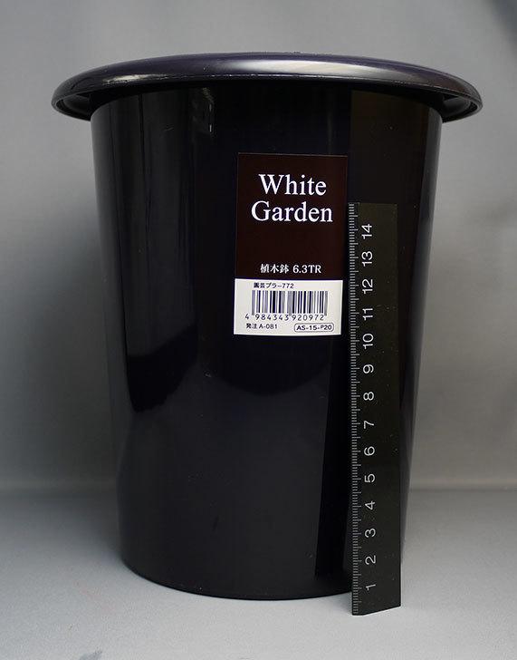 ダイソーでWhite-Garden-植木鉢-6.3TRを2個買って来た3.jpg