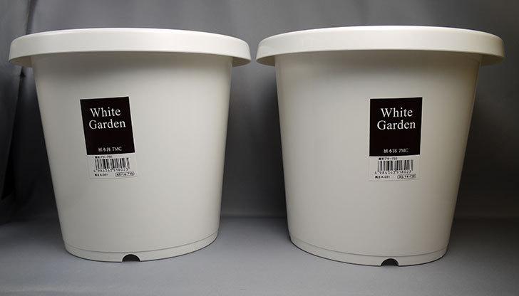 ダイソーでWhite-Garden-植木鉢-7MCを買って来た1.jpg