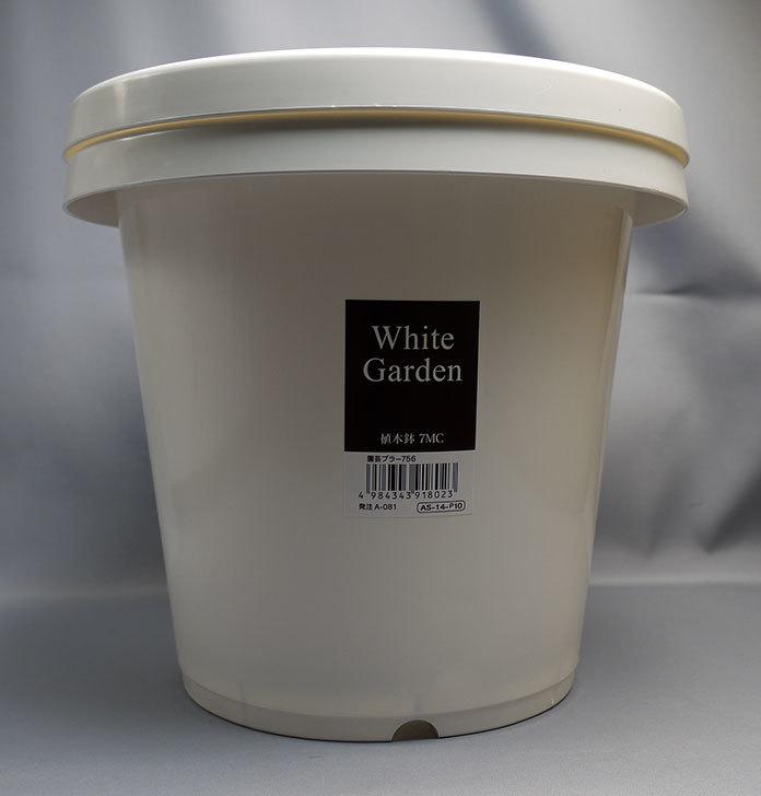 ダイソーでWhite-Garden-植木鉢-7MCを追加で2個買って来た.jpg