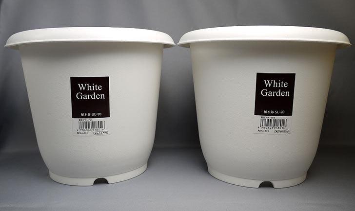ダイソーでWhite-Garden-植木鉢-SU-70を買って来た1.jpg