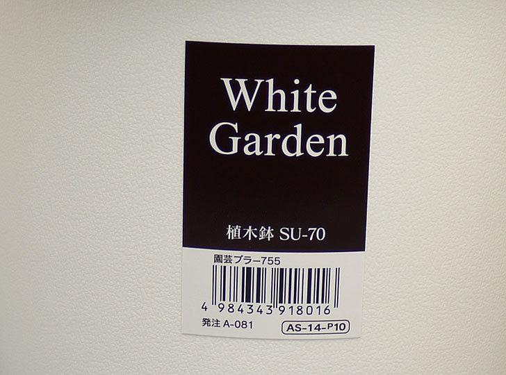ダイソーでWhite-Garden-植木鉢-SU-70を買って来た6.jpg