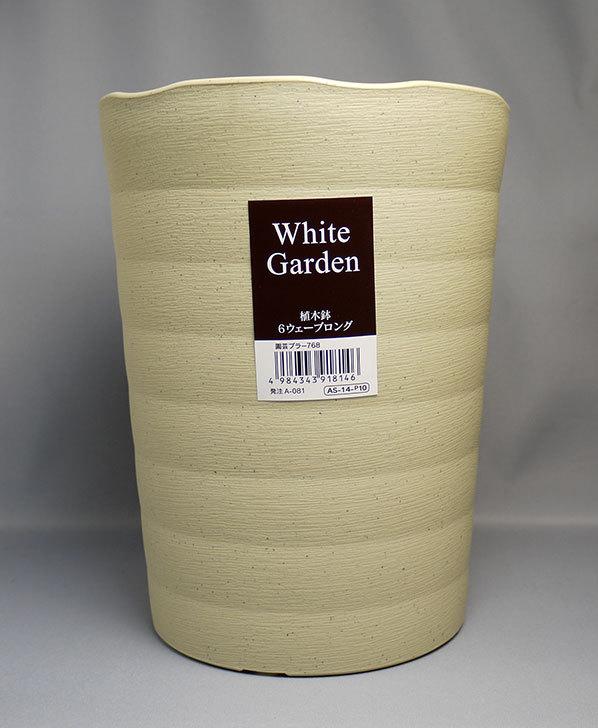 ダイソーでWhite Garden 植木鉢 6ウェーブロングを買って来た2.jpg