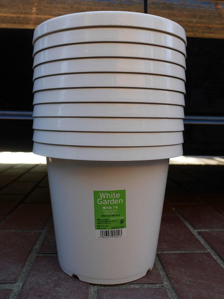 ダイソーでWhite Garden 植木鉢 7号を10個買って来た。2021年-001.jpg