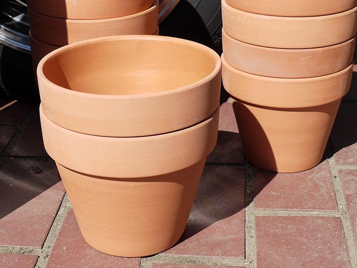ダイソーに素焼植木鉢-約17cmの在庫が久々にあったので買って来た1.jpg